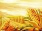中国玉米食品产业高峰论坛举办