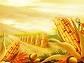 31日美玉米到中国口岸完税价上涨