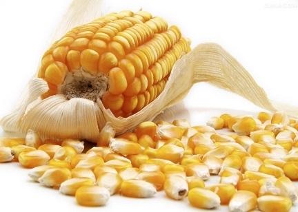 降水有利于新一季的玉米春播