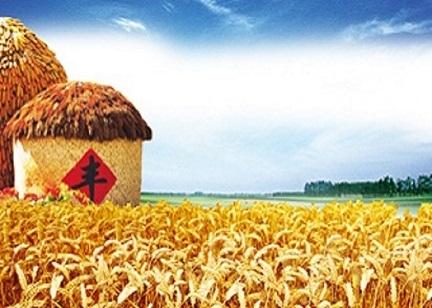 全国政策性粮食库存数量和质量大清查